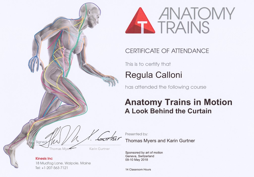 Anatomy Trains By Thomas Myers Images - human body anatomy